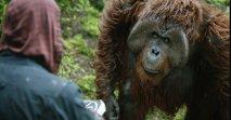Apes Revolution: Il Pianeta delle Scimmie - Immagine 2