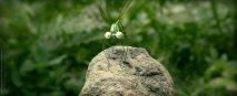 Minuscule - La Valle delle Formiche Perdute - Immagine 8