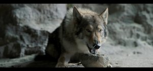 Alpha - Un'amicizia forte come la vita - Trailer ufficiale